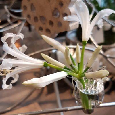 witte-bloem-910x1024.jpg