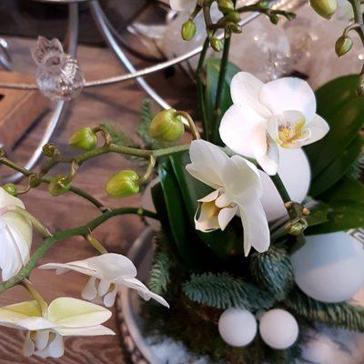 witte-bloemen-1024x1024.jpg