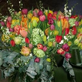 Tulp mix voorjaar