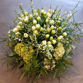 Tulp wit voorjaar